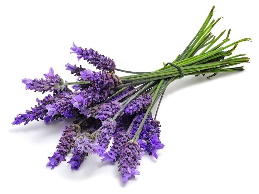 گیاه لوندر مواد اولیه در عطرسازی